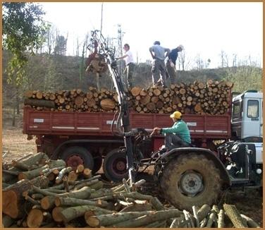 avviso taglio legna 2019-2020